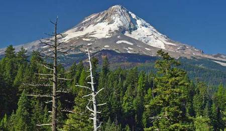 The two snags and Mount Hood in September 2008