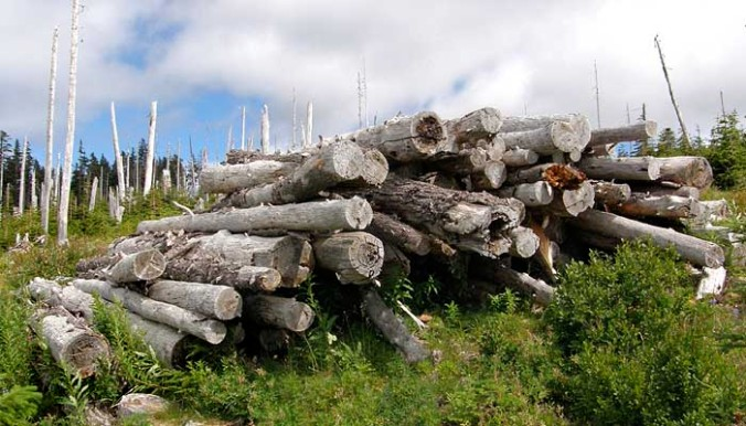 We now know that the logging heyday on our Forest Service lands was heavily subsidized by taxpayers, so the sight of piles of rotting logs left scattered across the Boundary clear cut only underscores the reckless, wasteful manner in which our forests were plundered
