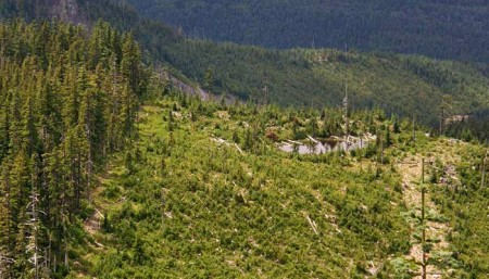 Looking west across the devastation zone of the Boundary clear cut, where the forest was cut to the wilderness boundary, and across lakes and canyons that stood in the way