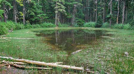 The twin to the logged-over lake, pictured above, this peaceful tarn is located just two hundred yards away, safely inside the wilderness boundary
