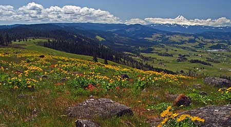 The sprawling meadows on Hood River Mountain are owned by a (so far) benevolent timber company, but are on the wrong side of the scenic area boundary for the purpose of public protection.