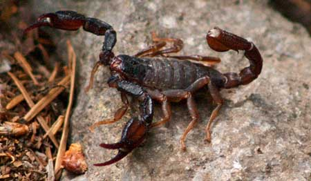What scorpions do when they've decided their photo-op is over..!