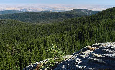 The eastside forests spreading out below Lookout Mountain look healthy enough from a distance, but in reality are in dire need of a bold new restoration strategy.