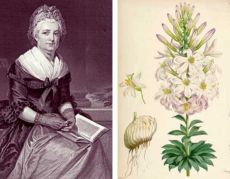 Martha Washington and a Nineteenth Century rendering of our western lily named in her honor