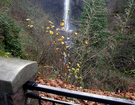 The disappearing Latourell Falls view: a thorny problem?