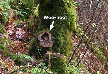 …and the telltale stump!
