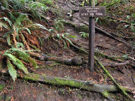 A forlorn sign attempts to reason with trail-cutters