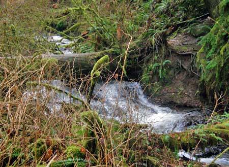 "The other ""bridge"" on upper Latourell Creek…"