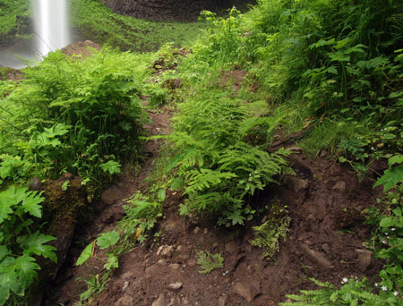 As it nears the falls, the boot path devolves into a web of muddy paths, where delicate ferns and wildflowers have been trampled