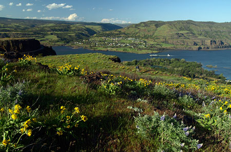 Year-round tick country: the Columbia River from the terraced slopes above Rowena Crest