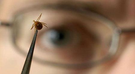 Ticks Ticks 10 Common Myths Wyeast Blog