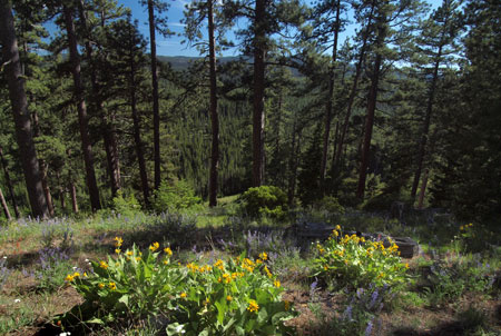 Ridgetop meadows and interesting rock outcrops are found throughout the area