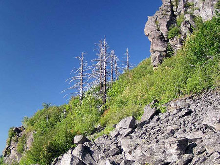 The proposed loop trail would traverse below these cliffs on the north side of Angels Rest