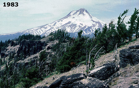 Healthy stands of Whitebark pine thrived on the south slope of Lookout Mountain in 1983