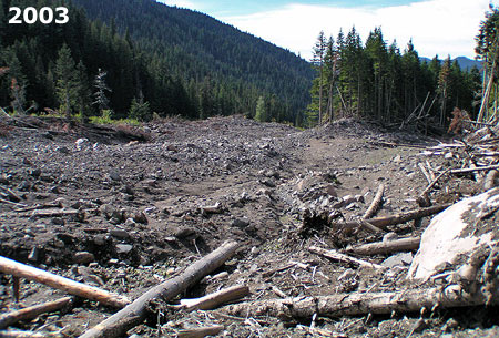 Looking downstream from the middle of the 2002-03 Muddy Fork debris flow