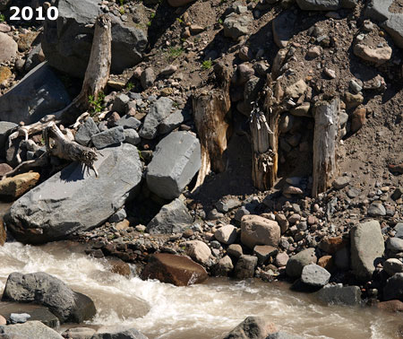 These stumps of trees snapped off by the 2002-03 debris flow have reappeared where the Muddy Fork has carved down to the original river level.