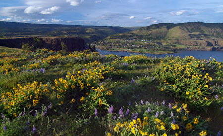 April: blustery winds at Rowena Crest..? Naturally!