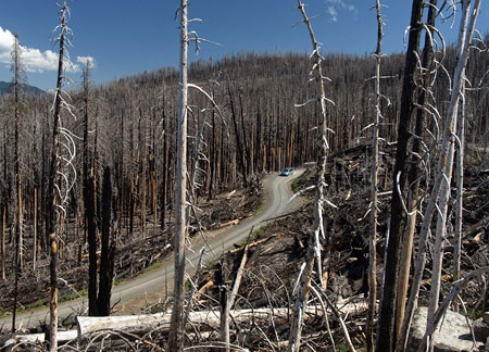 Cloud Cap Road in 2010: salvage logging slash lines the road two years after the Gnarl Fire swept through in August 2008