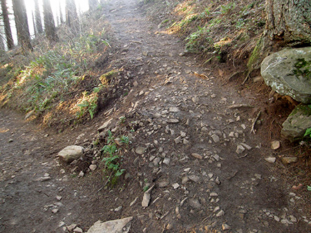 Switchback on the Angels Rest Trail coming unraveled from overuse