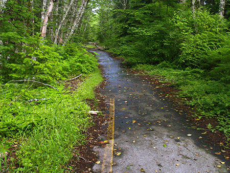 Vestige of better days: ferns and moss are gradually erasing the long-abandoned original loop highway on Laurel Hill
