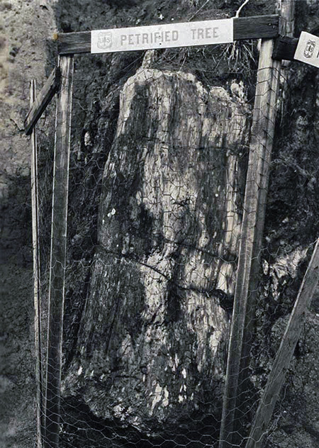 This petrified log was located at the east end of the McCord Creek bridge, near the original trailhead