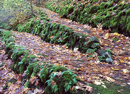 Legacy of the CCC - rustic stone retaining walls like these are found throughout the hike