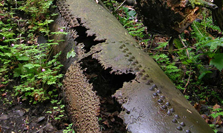 Myron Kelly's sturdy penstock pipes still survive along the upper trail