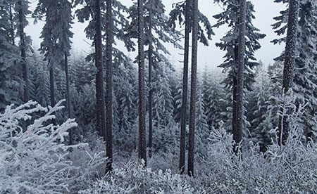 February features a frosty forest on the slopes of Mt. Defiance