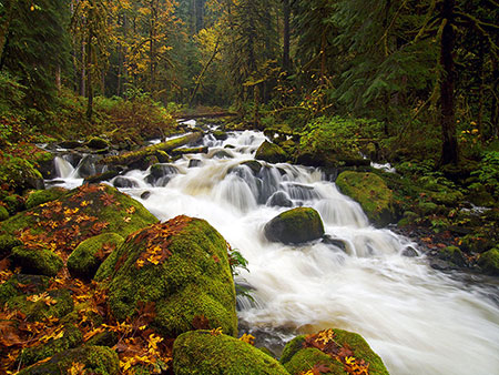 A rip-roaring Oneonta Creek after the first big autumn storms