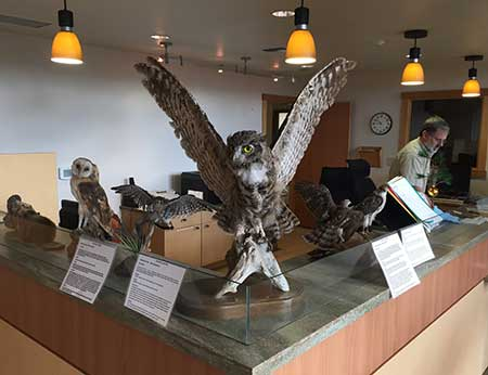 Owls on display at the front desk