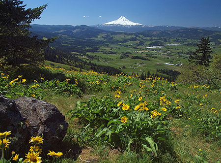 Mount Hood from Hood River Mountain in 2014