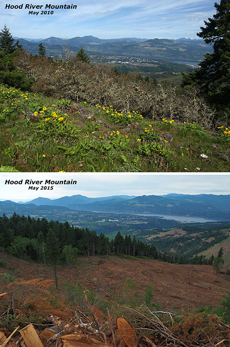 Then-and-now views toward Hood River from the summit
