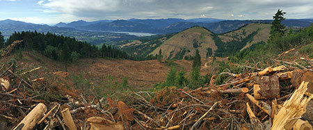 """Panoramic view of the new clearcut from the """"new"""" summit"""