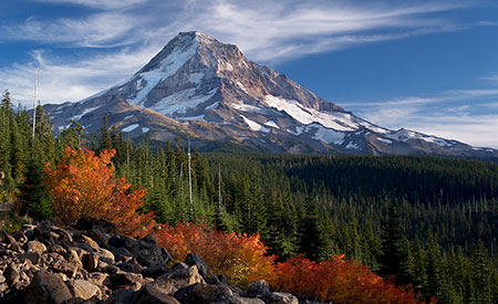 Cool mountain nights and bright, sunny days set these vine maple ablaze on Mount Hood's Vista Ridge