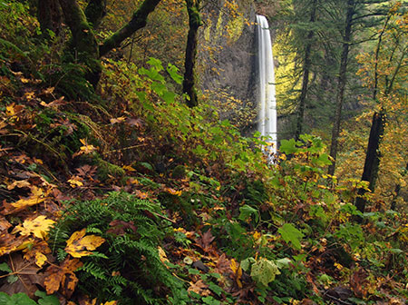 The Latourell Falls loop trail still has some color in early November