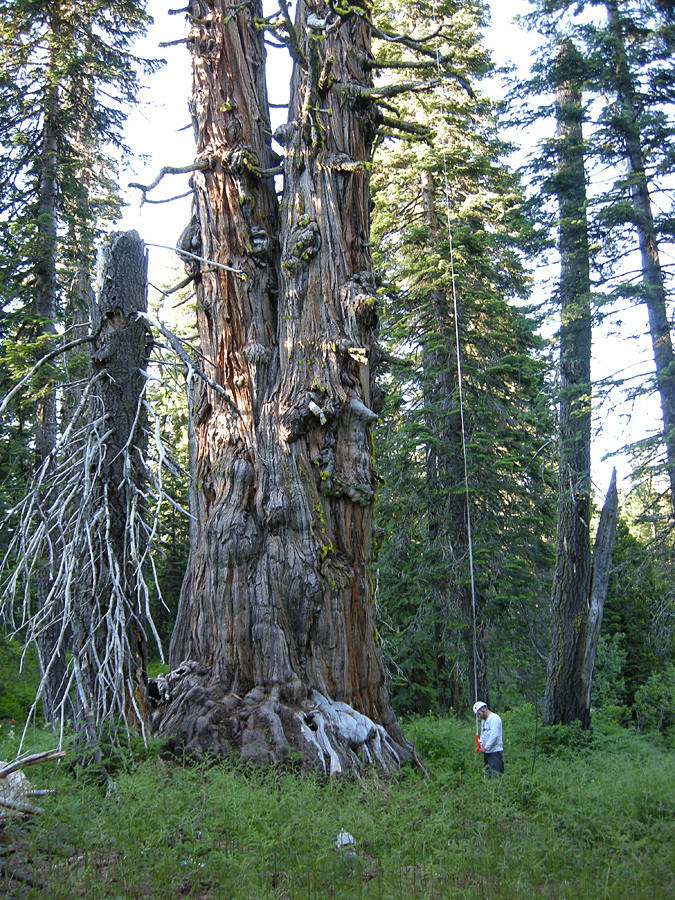 A person standing next to a large tree  Description automatically generated with medium confidence